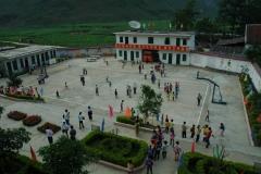2008 cycad school